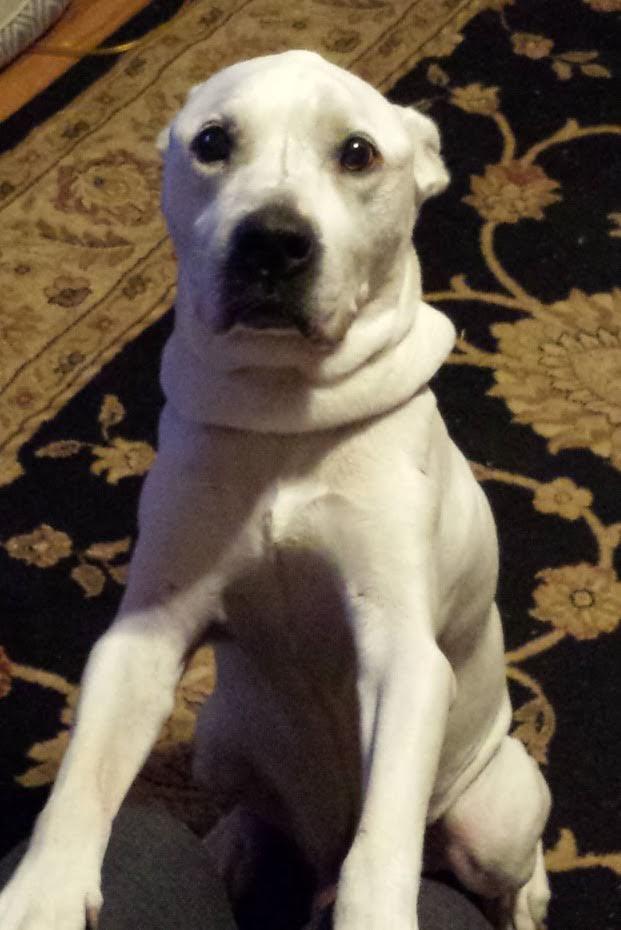 North Star Dog Rescue Madison Wi